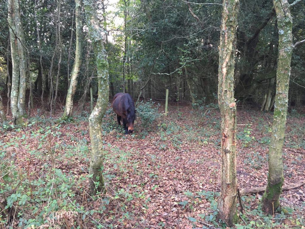 Wilde paard in bos