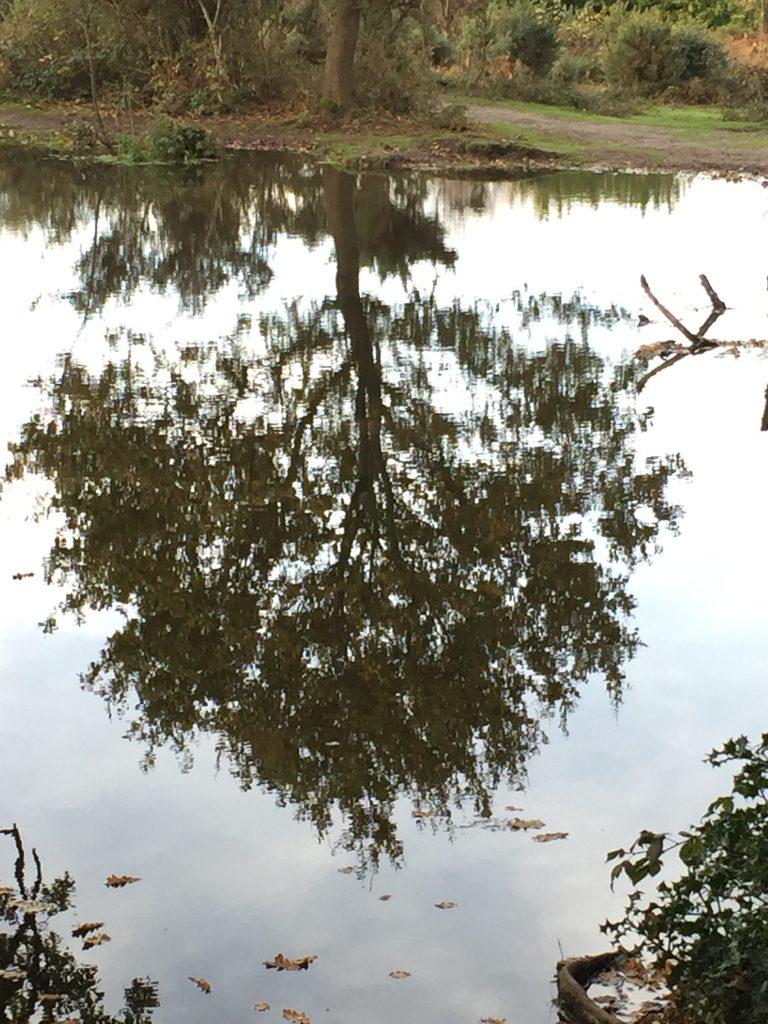 weerspiegeling boom