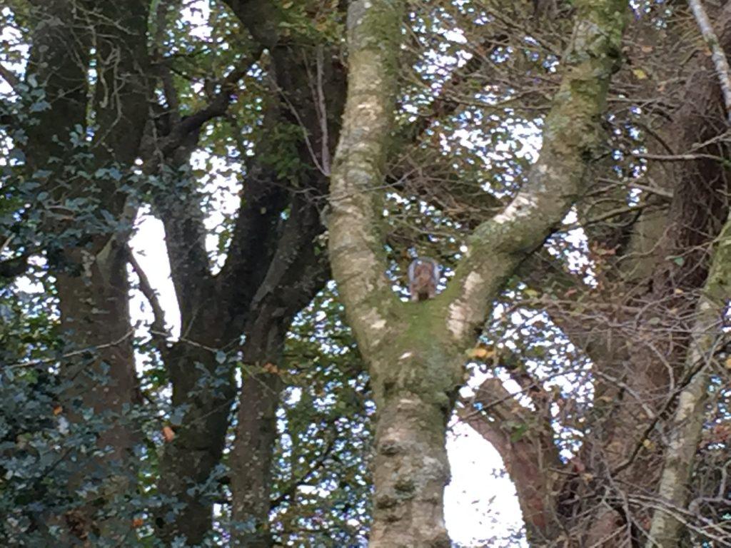 eekhoorn in boom
