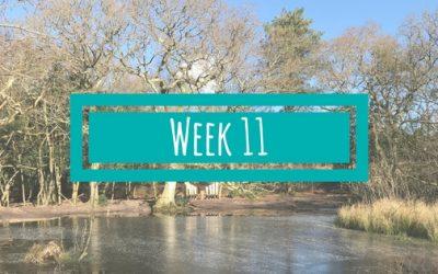 Week 11 van de BSR Academy